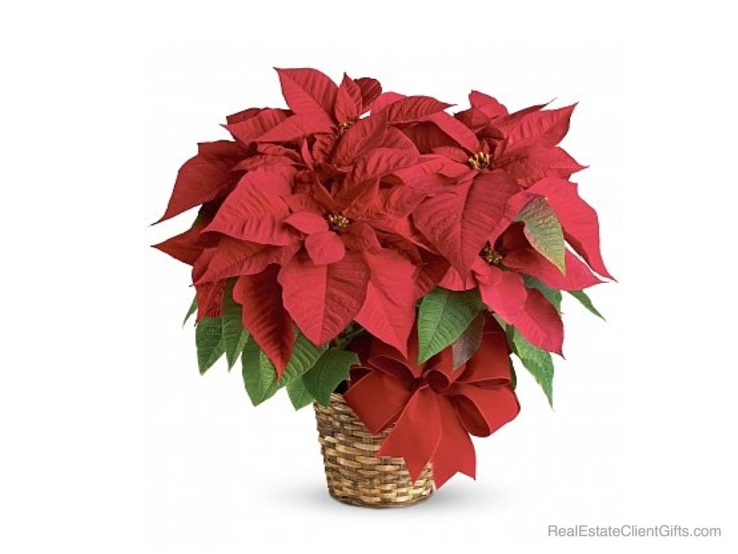 Цветы горшечные для мужчины в подарок