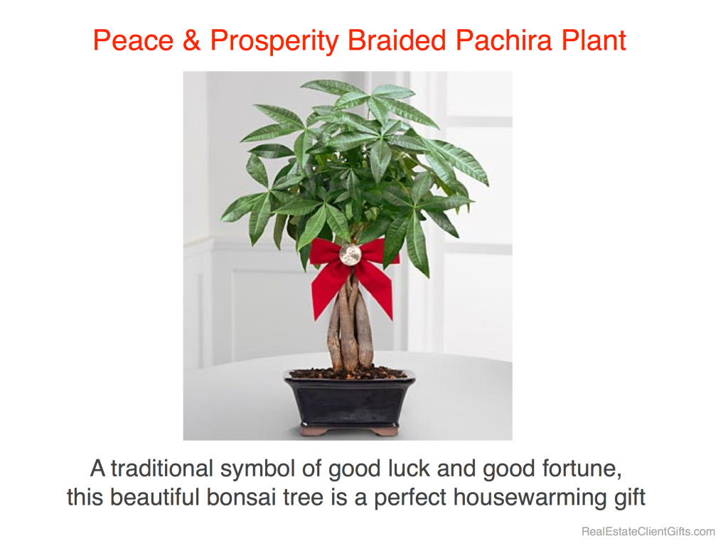Peace & Prosperity Money Tree Realtor Housewarming Thank You Gift