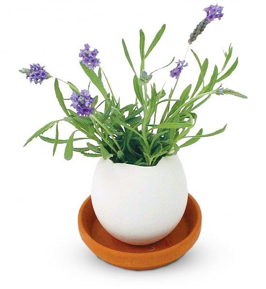 Lavender Eggling, Easter Gifts