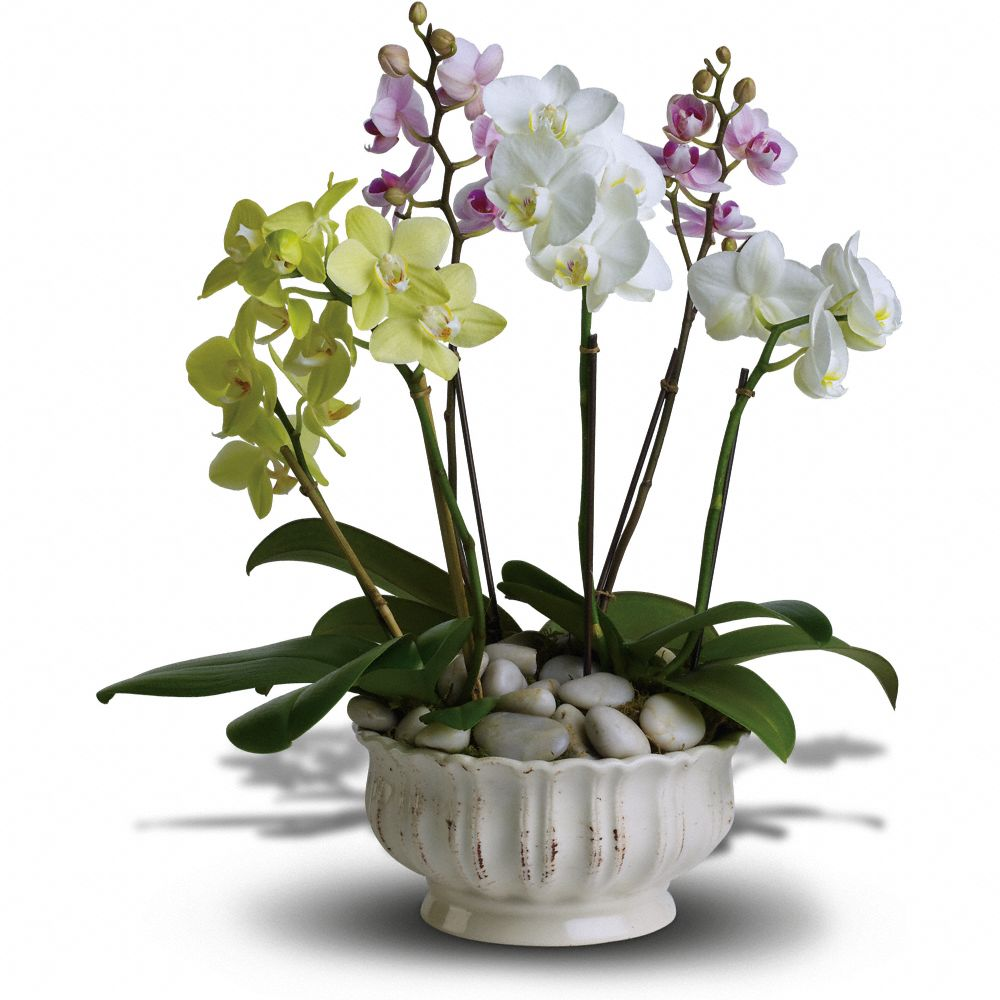 Regal Orchid Realtor Closing Gift, Realtor Closing Gift Ideas Over $100.00