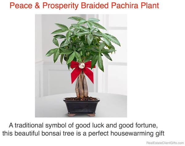 Peace Prosperity Money Tree Realtor Housewarming Thank You Gift
