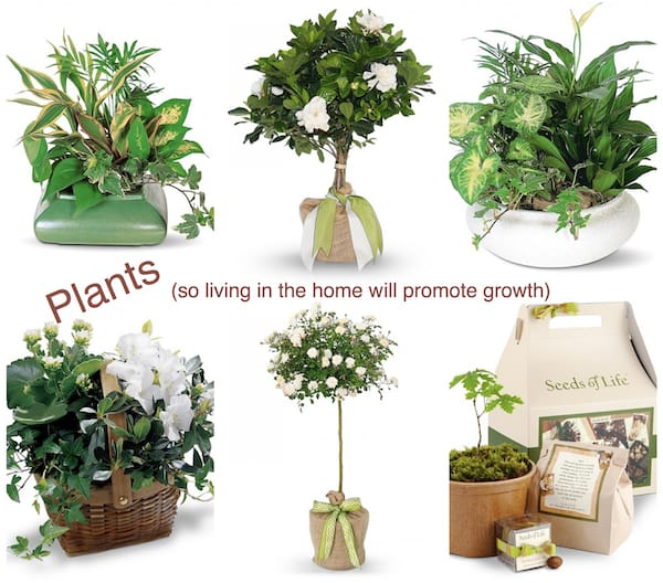 Plants, Fabulous & Meaningful Realtor Closing Gifts